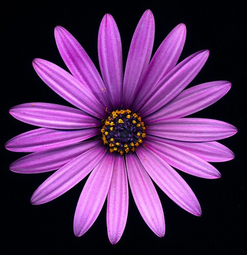 A flower that starts with a my web value figure 8 the purple flower image was created starting with a scan mightylinksfo