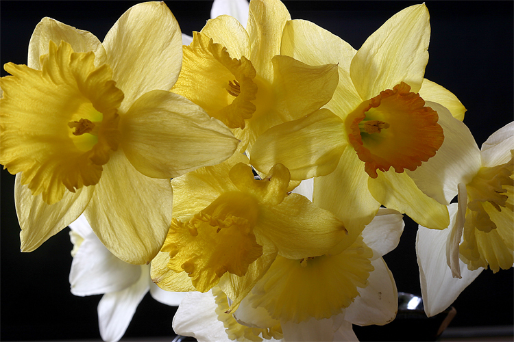 mixed daffs author sava gregory and verena
