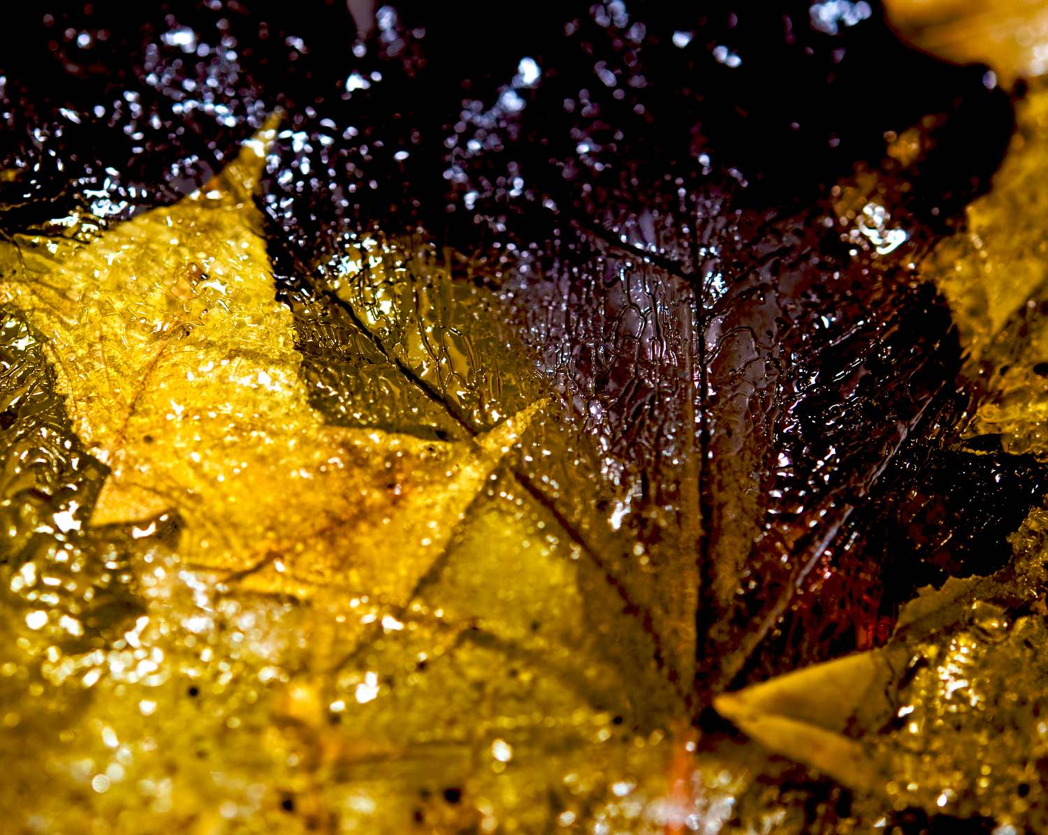 canadian autumn larger view author soini hannu