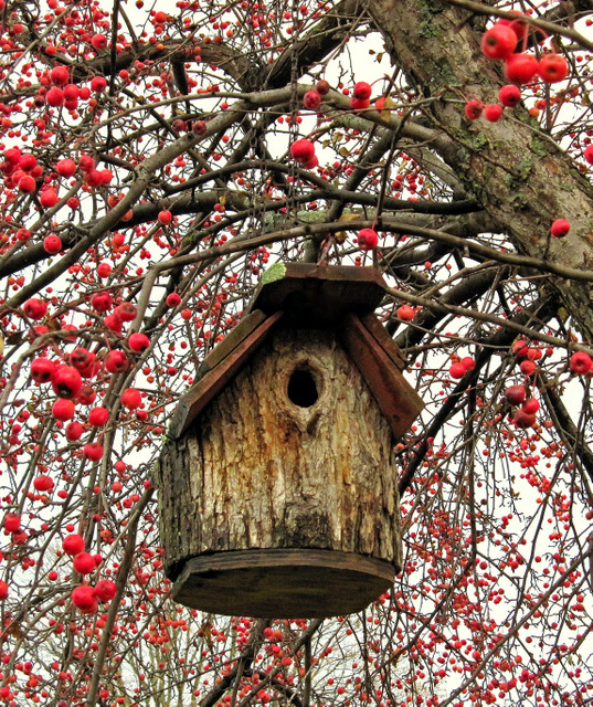 bird house and berries in the fall author pluskwi pluskwik paul