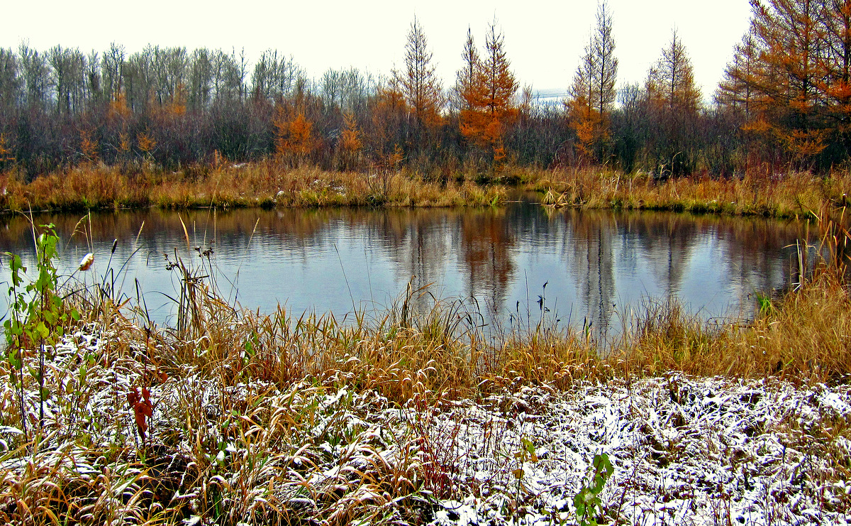 pond in the tamarack forest author pluskwik paul