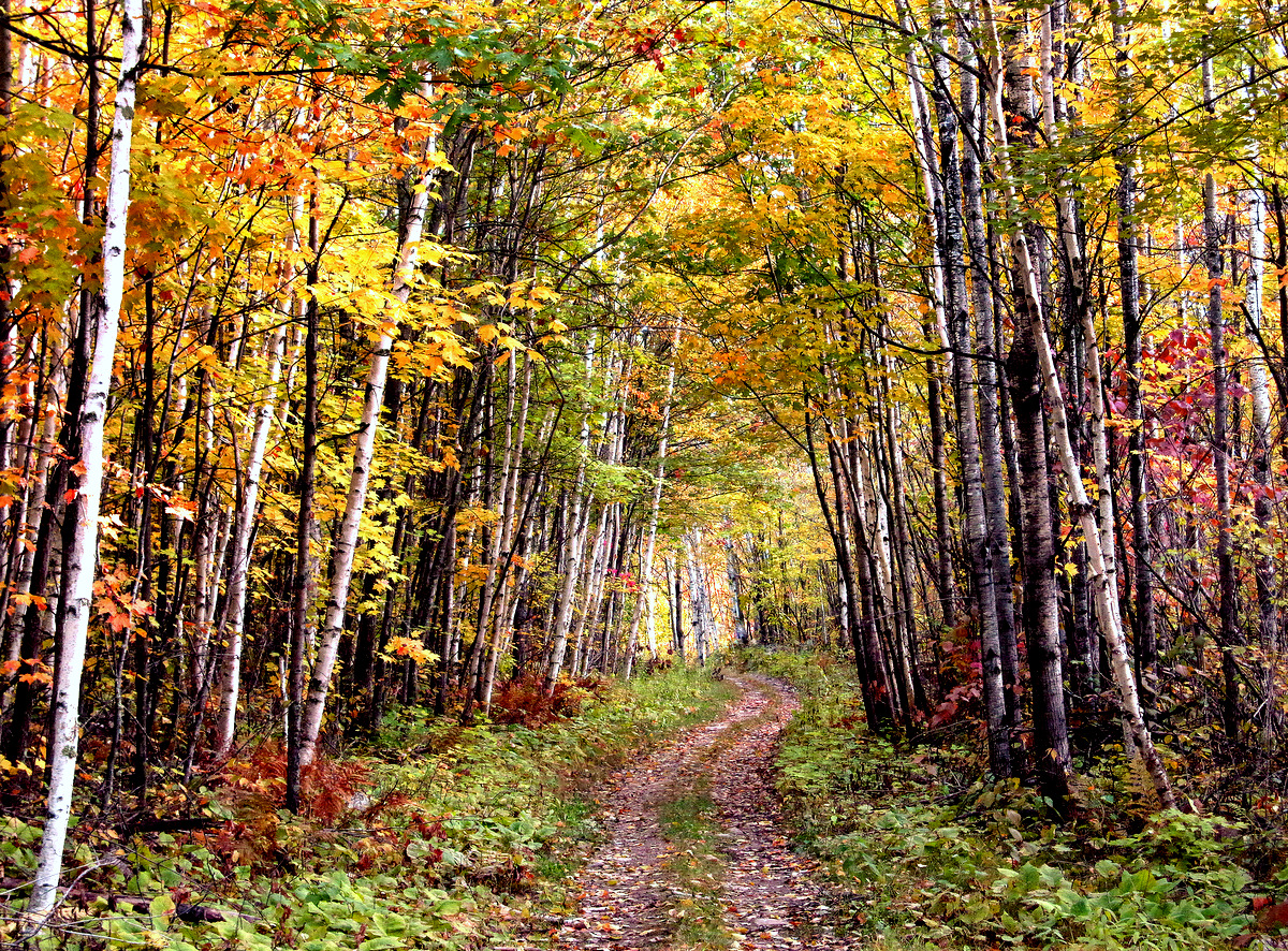 trail through the fall colors author pluskwik pau paul