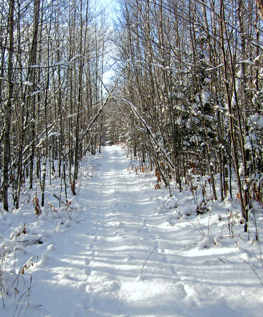 winter trail in the woods author pluskwik paul