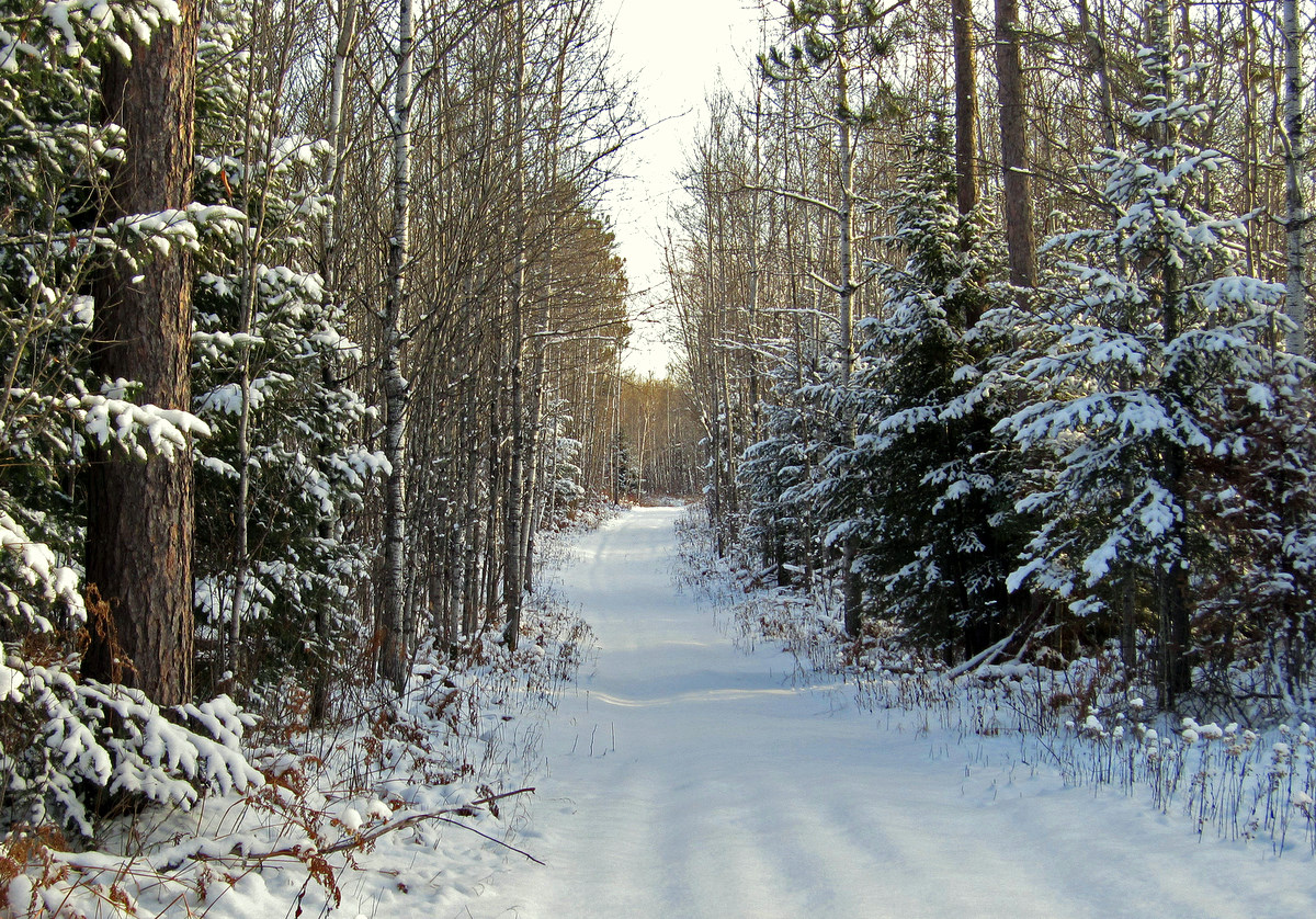 old logging road winter view author pluskwik paul