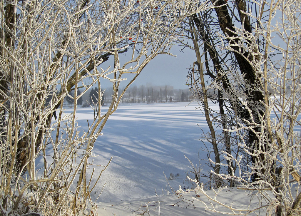 view on to the frozen lake author pluskwik paul
