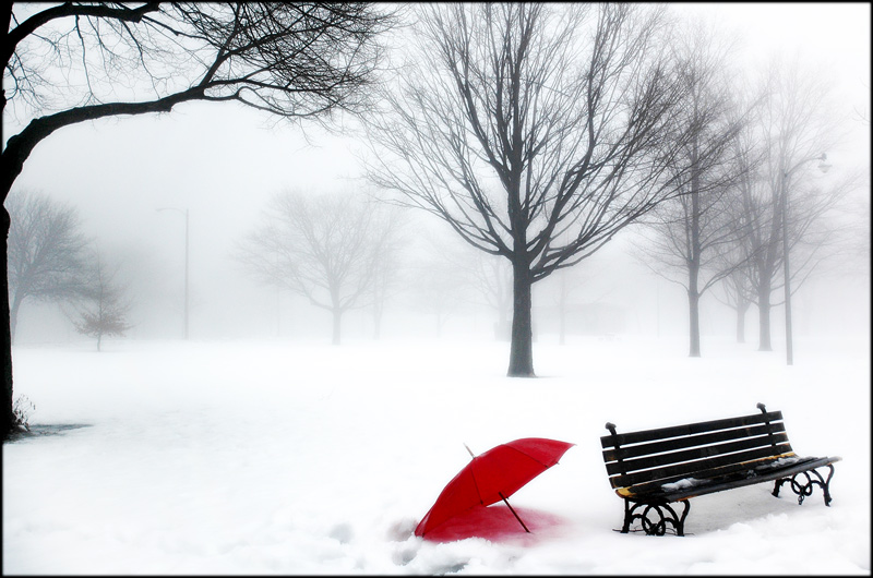 red umbrella and an empty park bench author holte tim