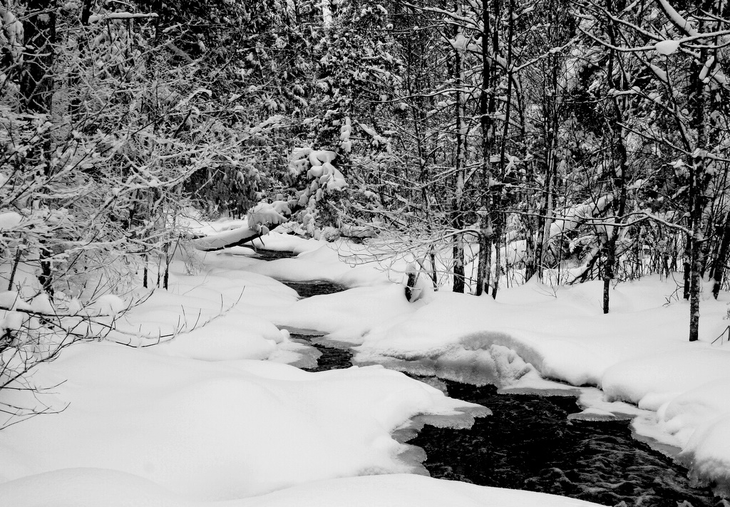 winter view of the elbow river author pluskwik pa paul