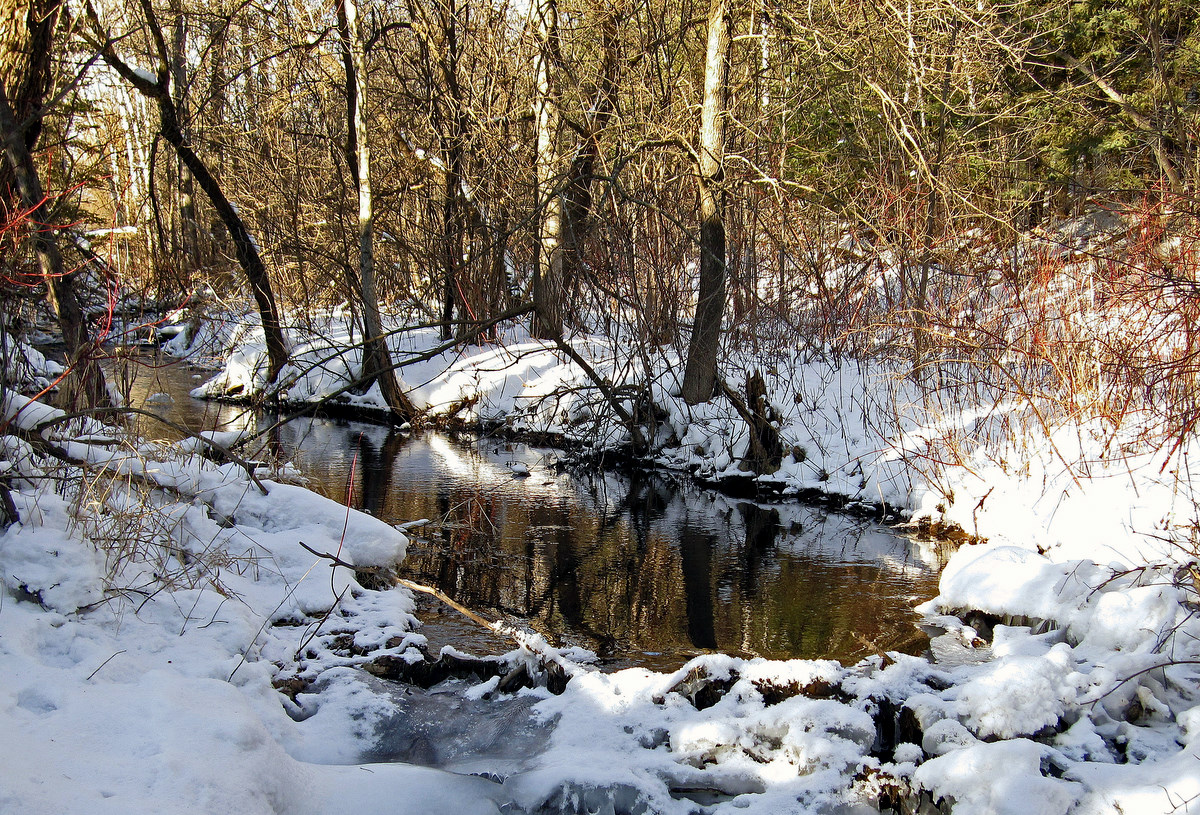 water slows at a small beaver dam author pluskwik paul