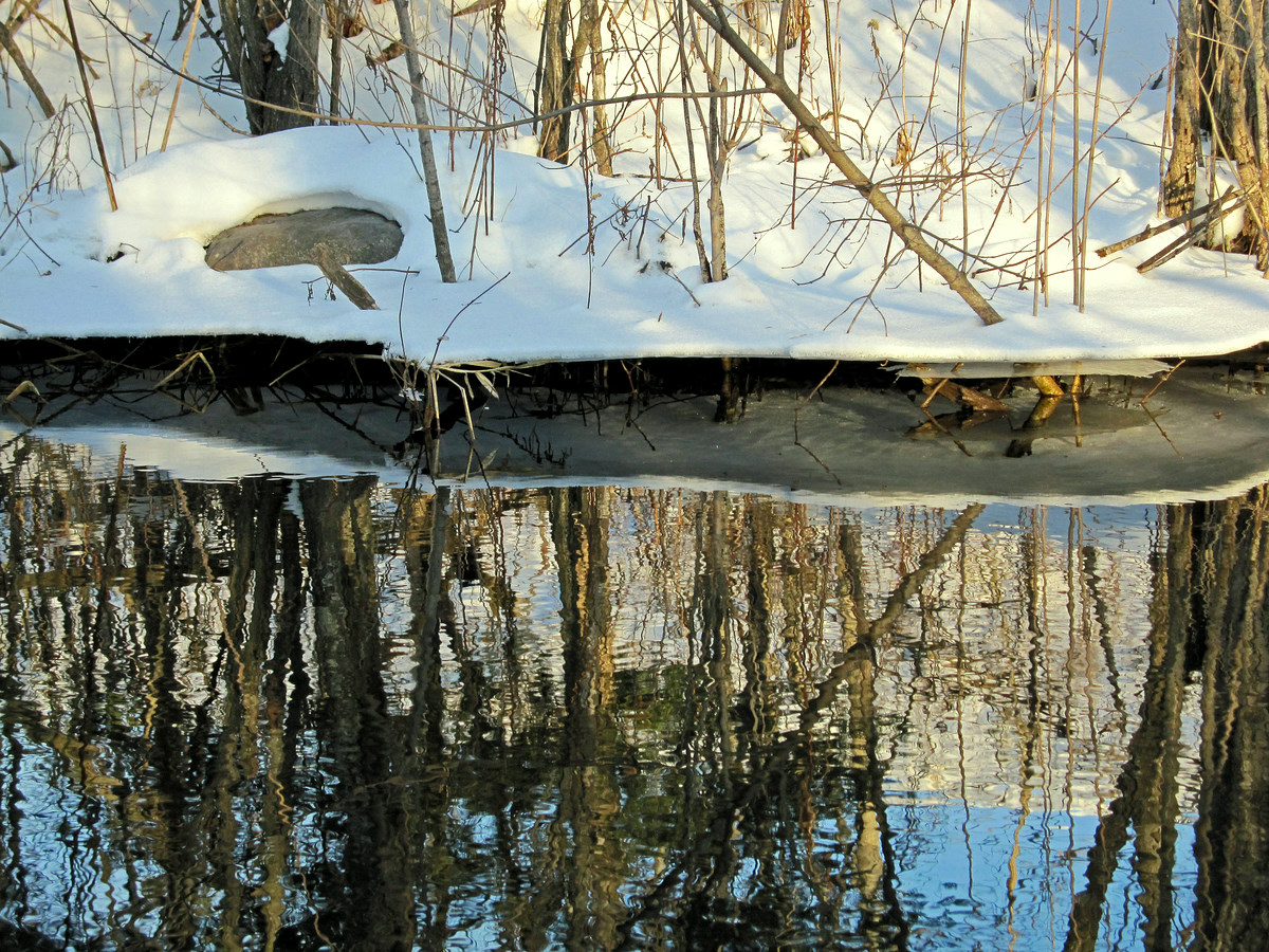 winter reflections in the pond author pluskwik pa paul