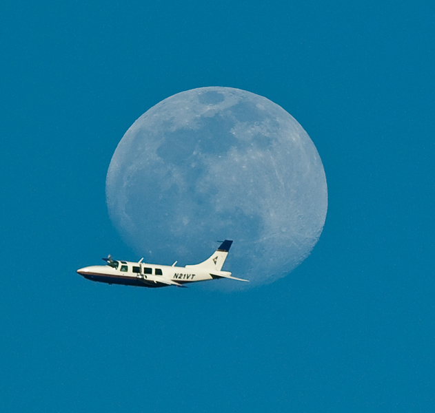 fly me to the moon author watson richard
