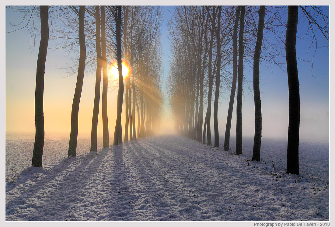 snow mist and trees author de faveri paolo