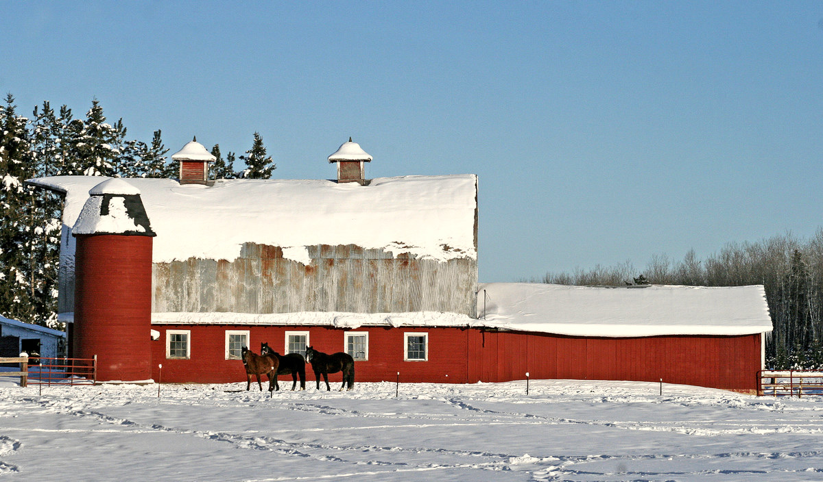 red barn and horses author pluskwik paul