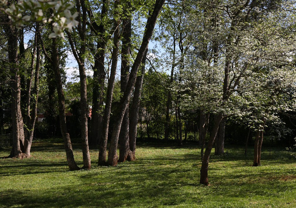 trees side yard april author kelly landrum