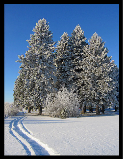 snowmobiletrail into the frosty pine trees author pluskwik paul