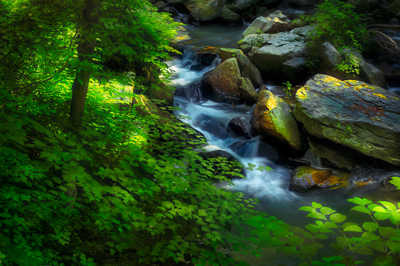 secluded falls author gutowski anthony