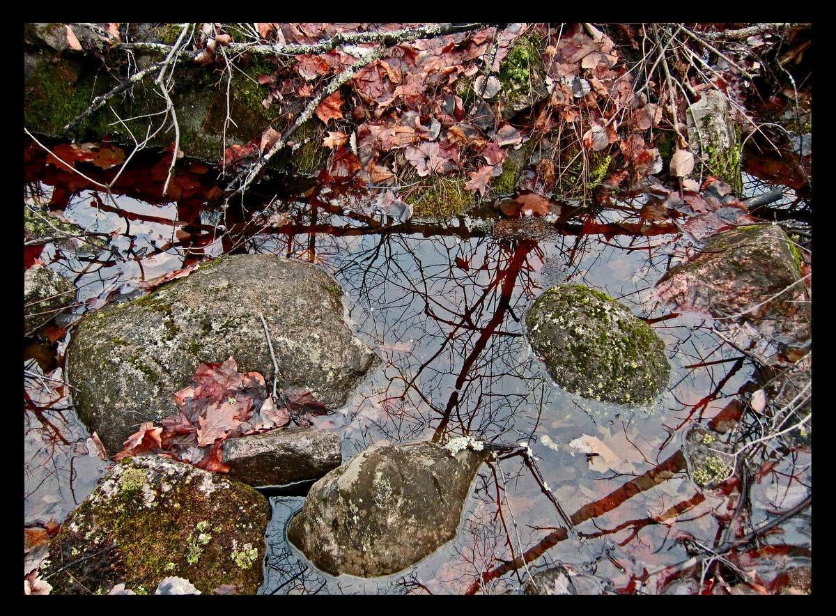 a puddle of melted snow author pluskwik paul