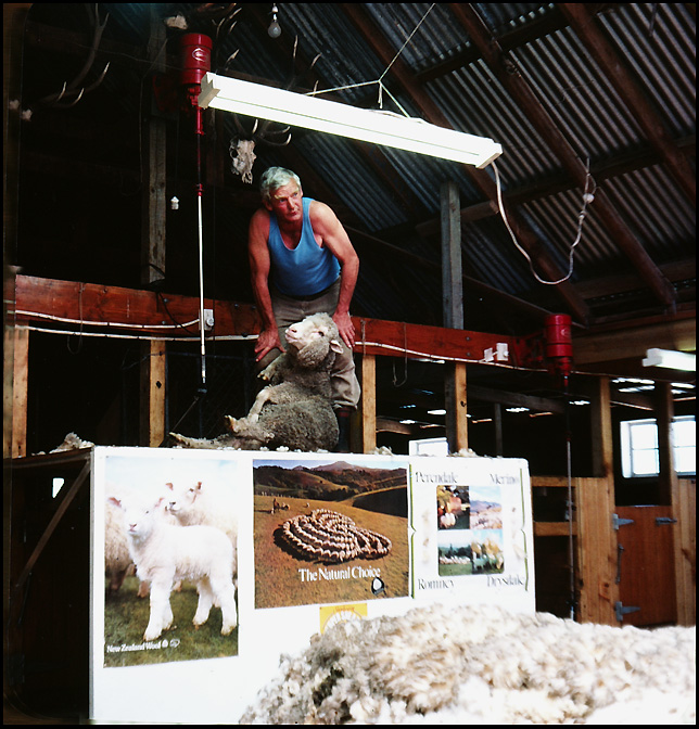 how to shear a sheep in about minute queenstown siegel honolulu gerry