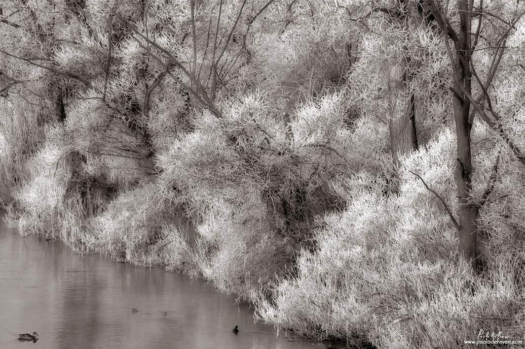 frost at the river bank b w version author de f faveri paolo