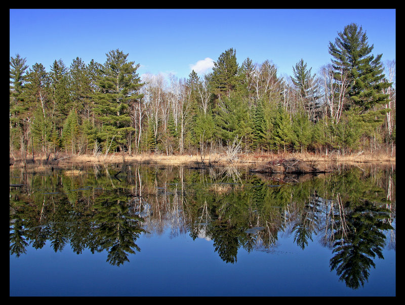 spring reflections on a small beaver pond author pluskwik paul