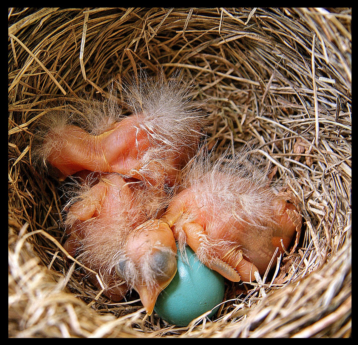 fragile new life for the born robins author p pluskwik paul