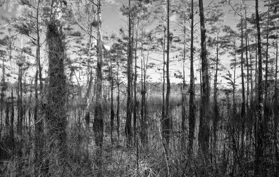landscape b w author watson richard