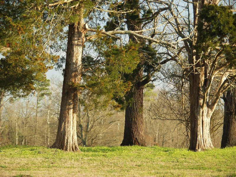 trees near the old house author kelly landrum