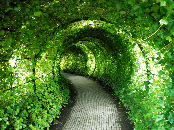 green tunnel author kashani kombizz