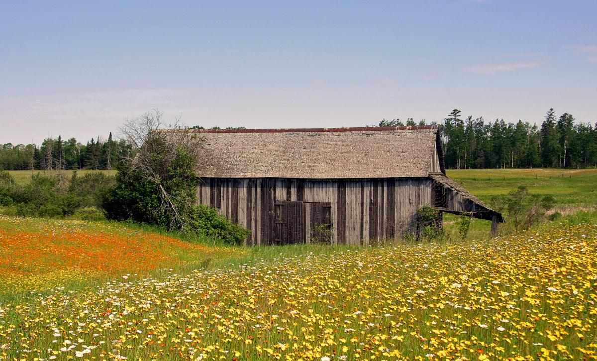 farm field full of wild flowers in bloom author p pluskwik paul