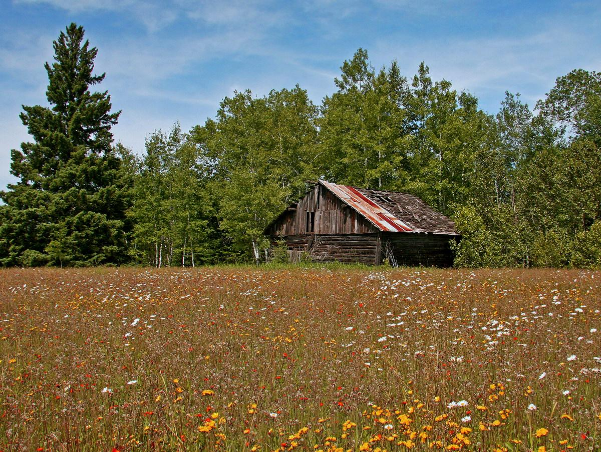 farm field and old building in summer author pluskwik paul