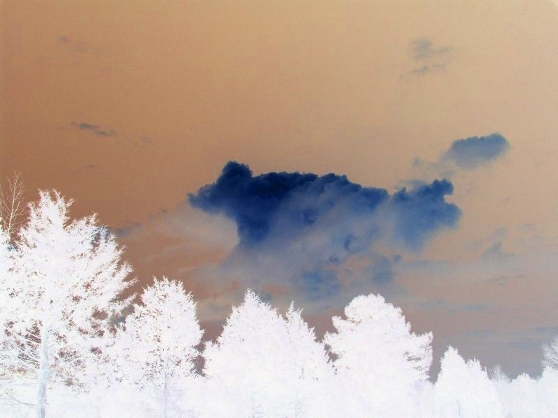 clouds and trees color negative author kelly land landrum