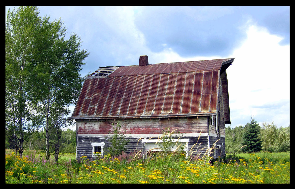 old barn and wild flowers author pluskwik paul