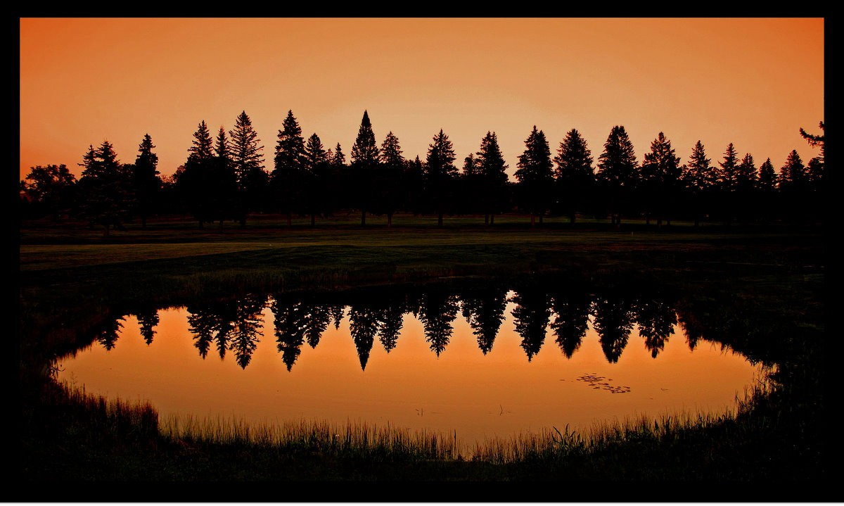 pine trees reflected at sunset in the pond author pluskwik paul