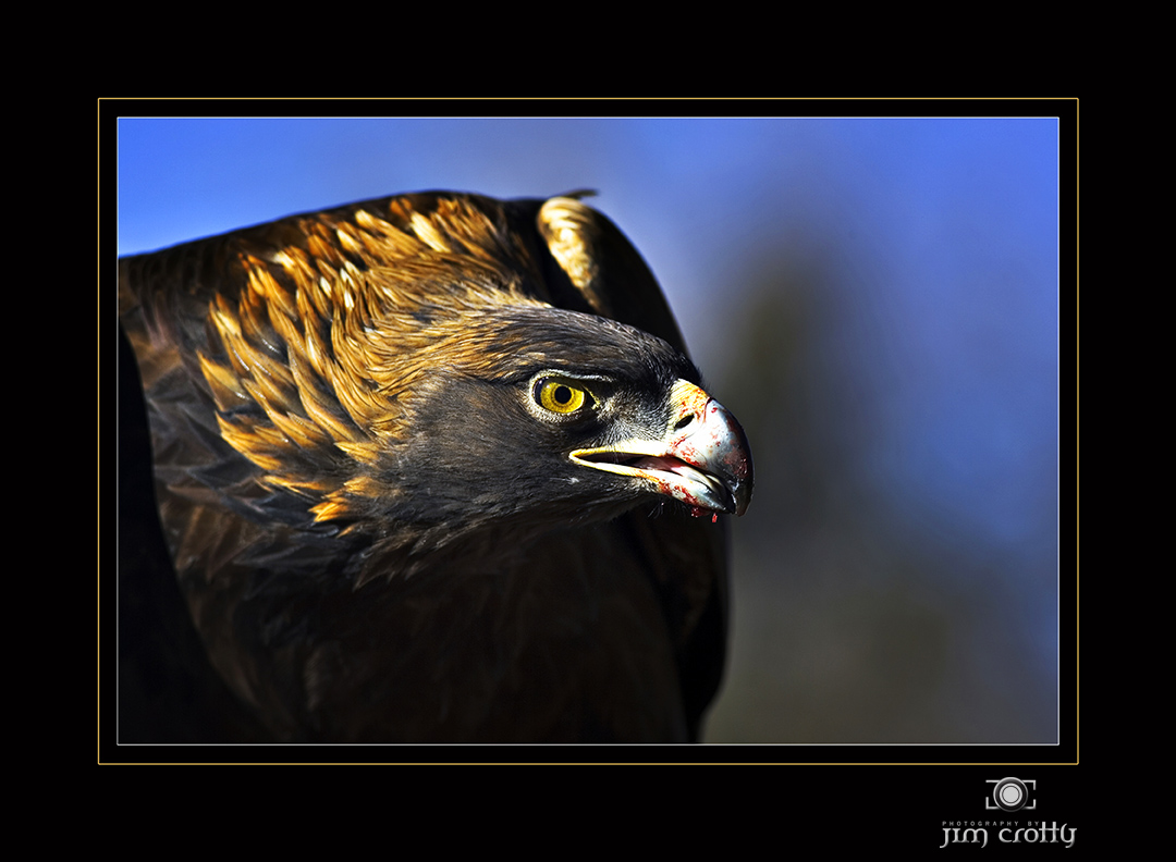 golden eagle author crotty jim