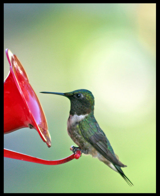 visitor at the feeder author pluskwik paul
