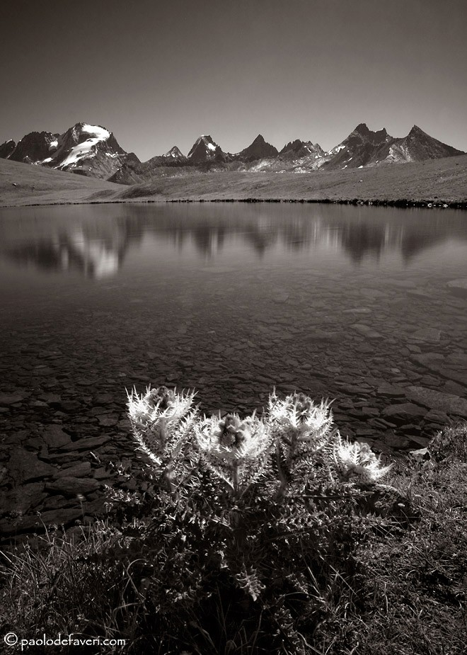thistles and peaks author de faveri paolo