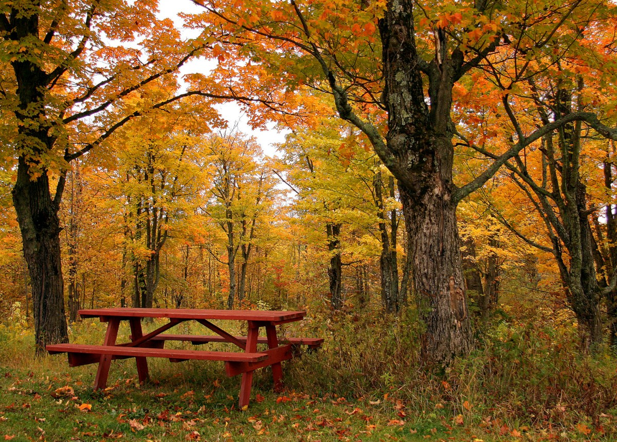 great place for a fall picnic author pluskwik pau paul