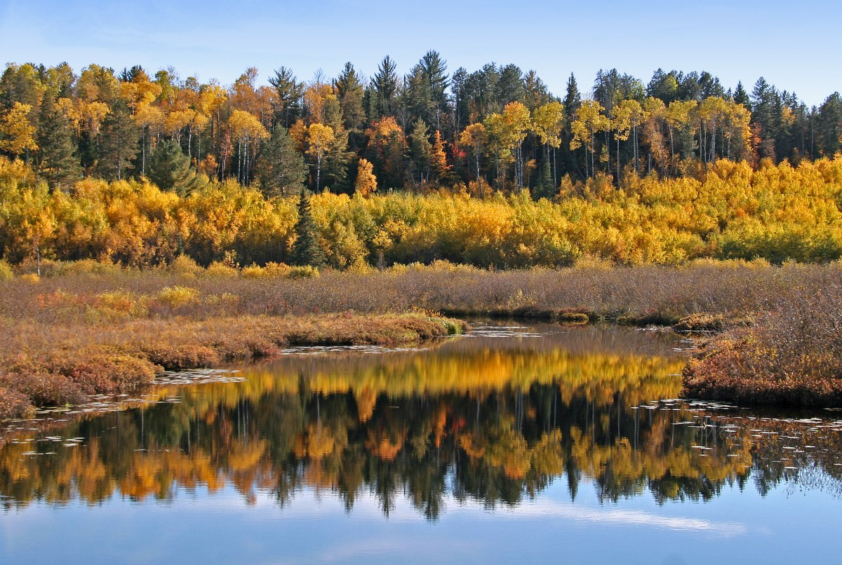 fall reflections in a river author pluskwik paul