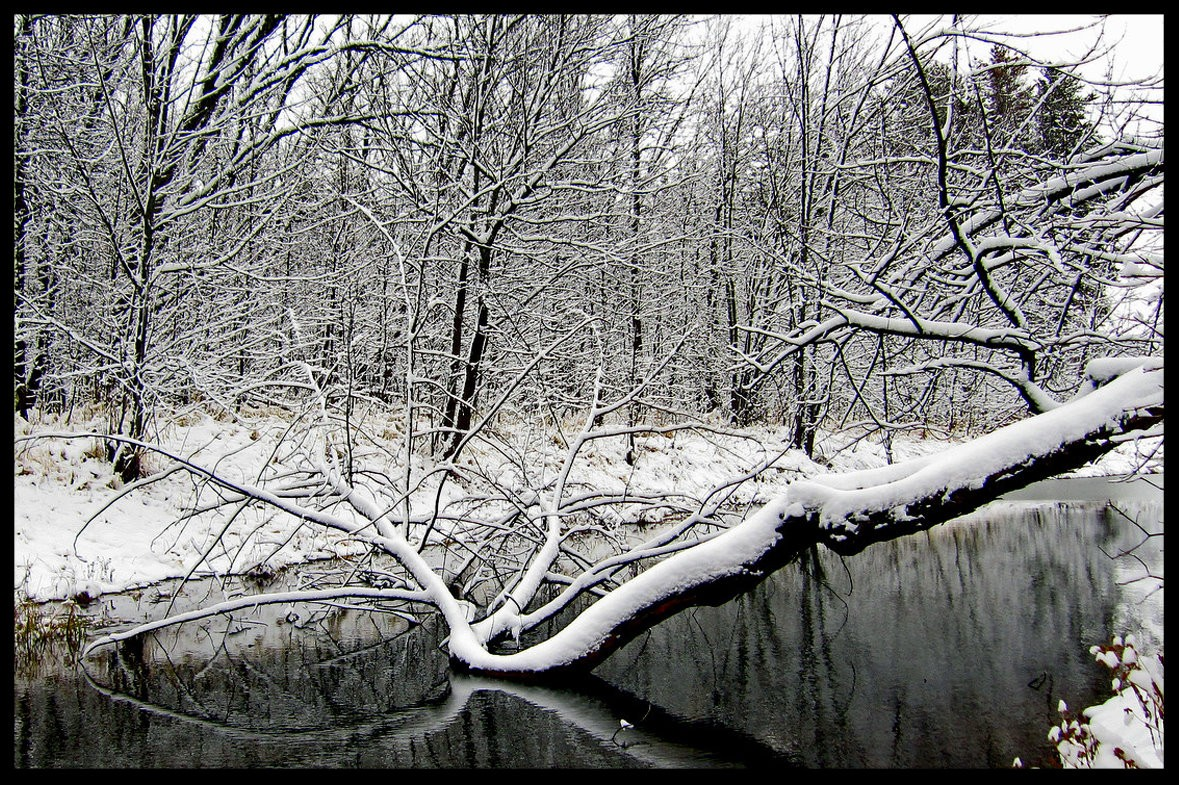 winter view of a pond author pluskwik paul