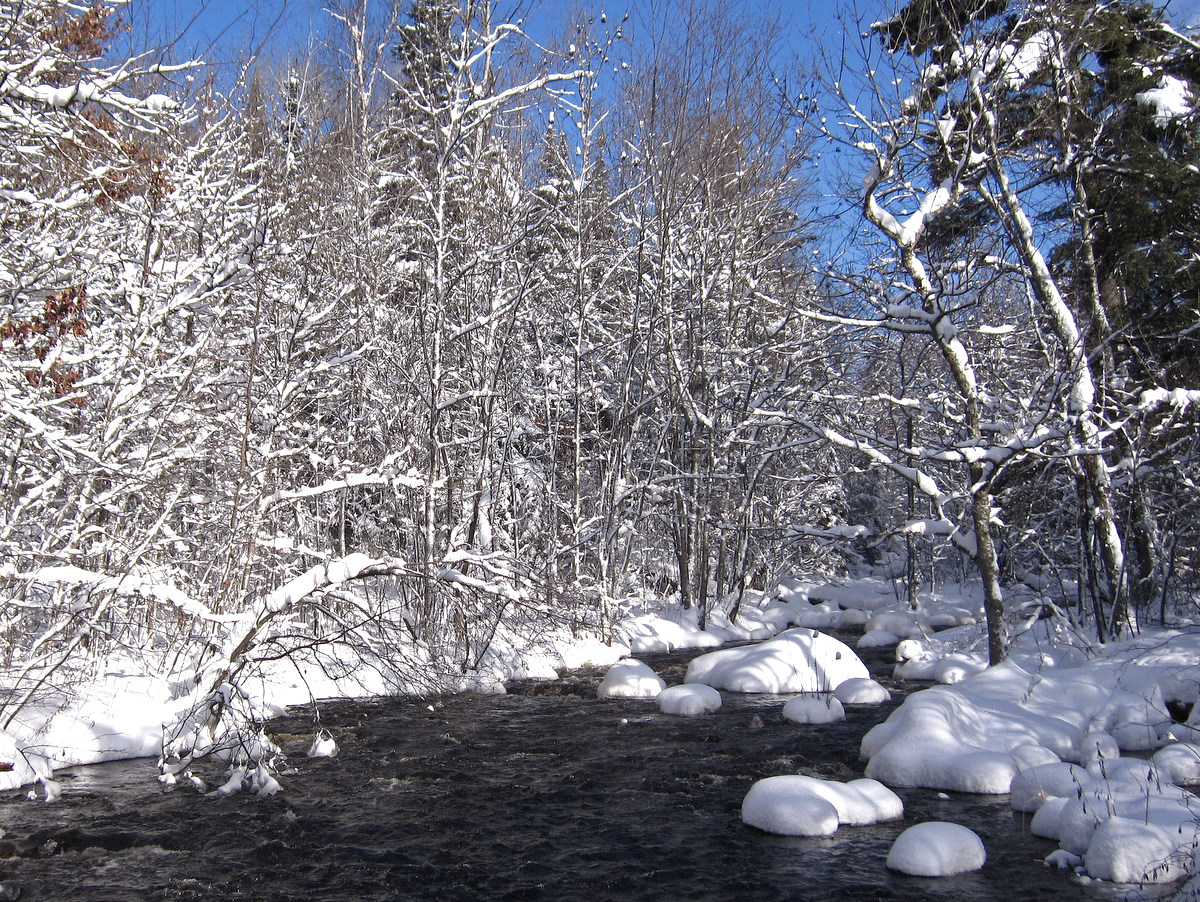 winter landscape of the elbow river author pluskw pluskwik paul