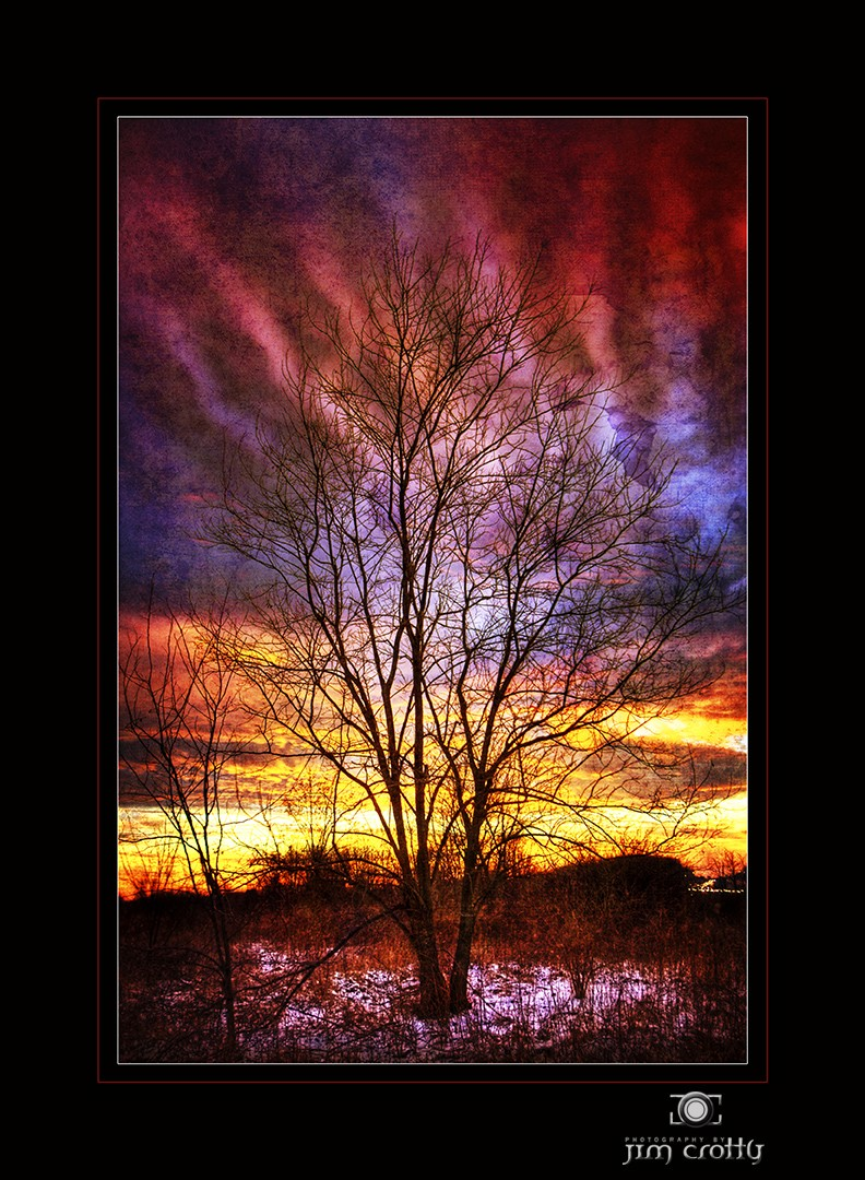 forgotten light by jim crotty author