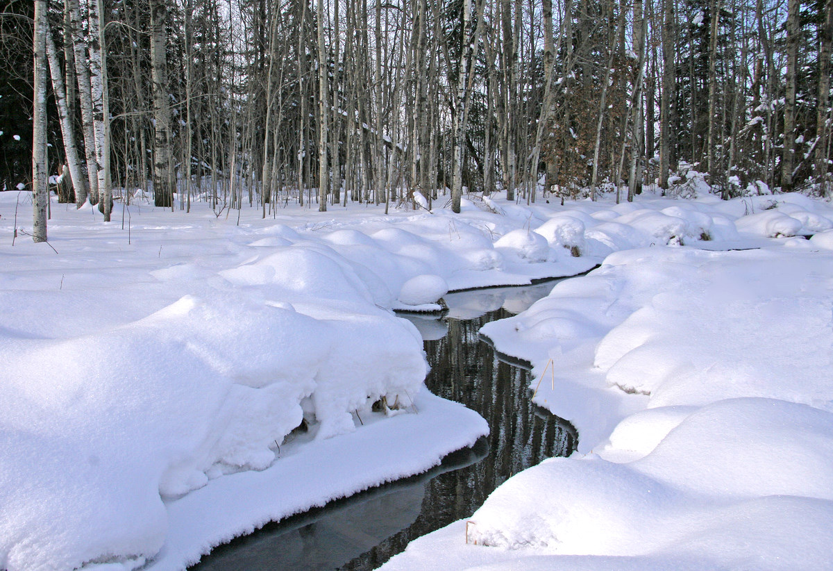 small stream in the winter author pluskwik paul