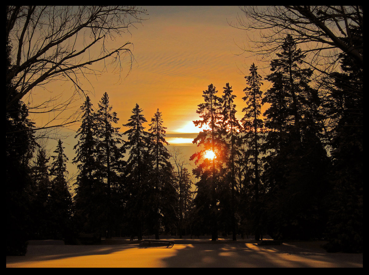 winter sunset through the pines author pluskwik p paul