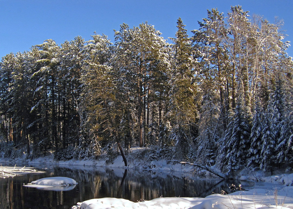 snow covered pines along the river author pluskwi pluskwik paul
