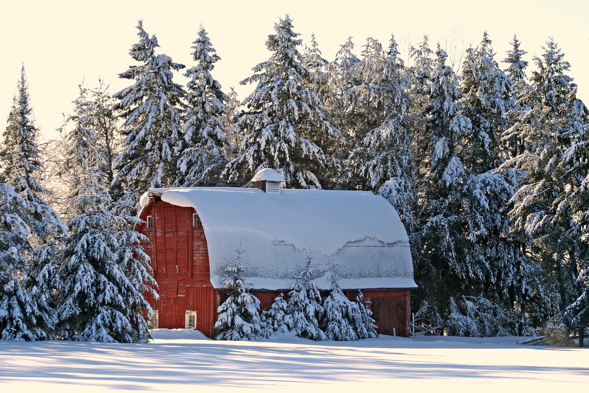 old red barn in the pines author pluskwik paul