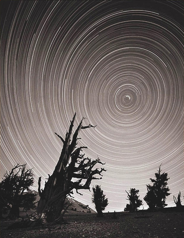 star trails ancient bristlecone forest author c coyote lost