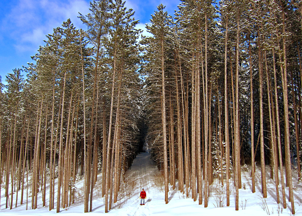 snowshoeing among the tall pines author pluskwik paul