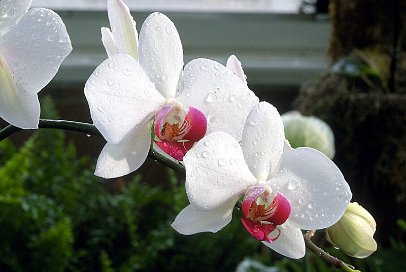 wed orchids author phelan rich