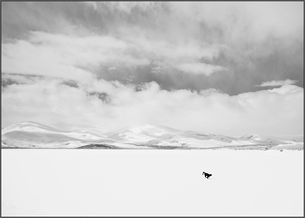 a black cat on frozen lake author celasun bulent