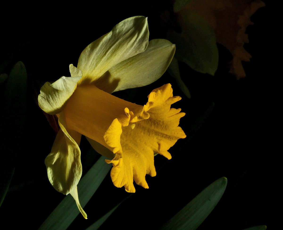 outdoor daff img aw author sava gregory and veren verena