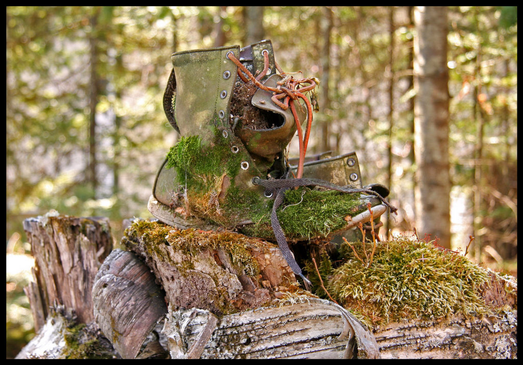 old leather boot on a stump author pluskwik paul